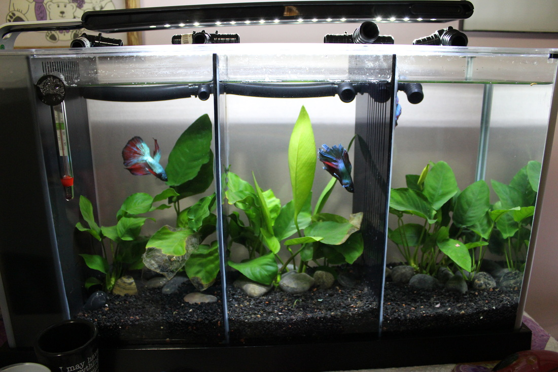 Image Result For Fluval Spec V